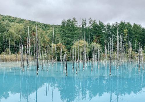 小さな旅:美瑛・青い池